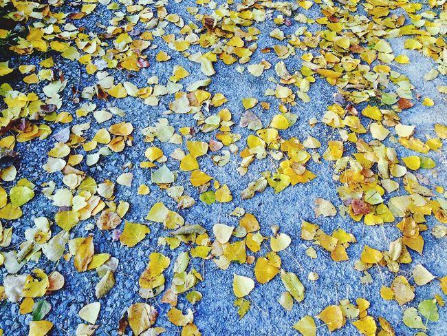 Autumn Herbst Aut My ( ) Picks unno First Eyeem Photo