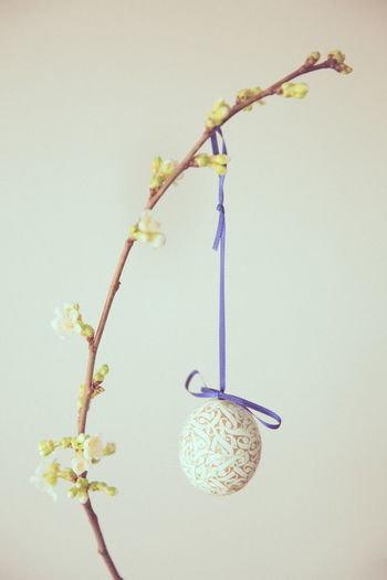 Close-Up Of Easter Egg Hanging On Plant Against White Background