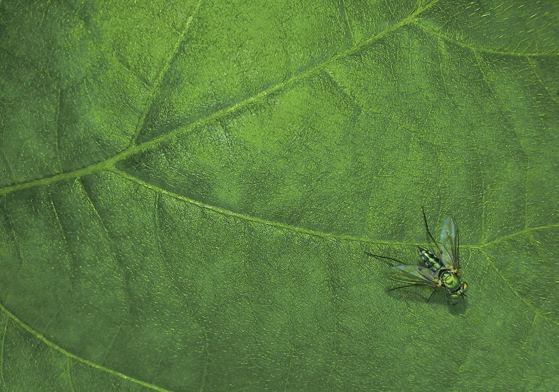 Insects on green leaf Green Color Insect Animal Themes Animal Wildlife Plant Part Invertebrate Animal No People Leaf Nature High Angle View Close-up Animals In The Wild Beauty In Nature One Animal Animal Wing Plant Day Land Directly Above