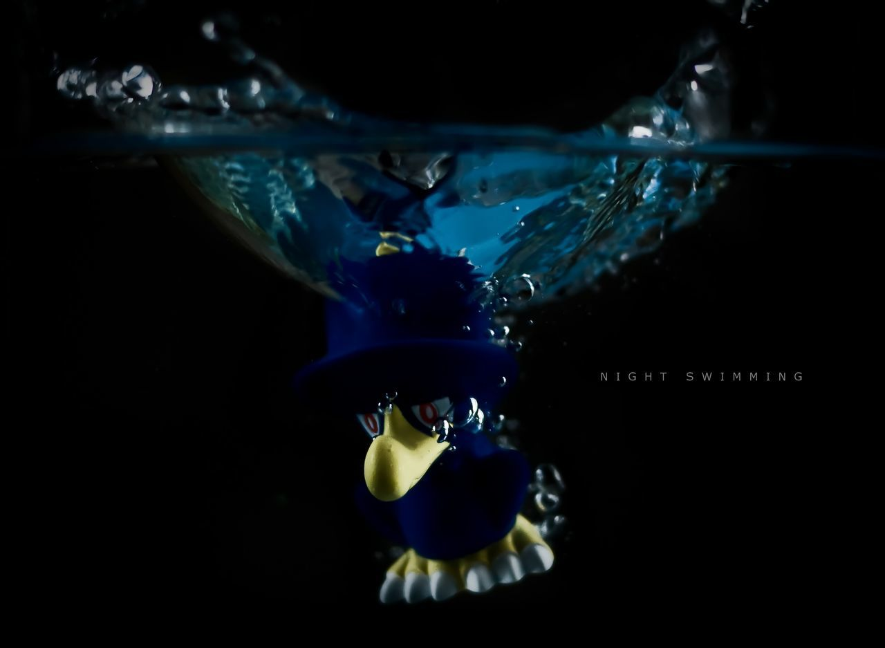 water, underwater, fish, swimming, animal themes, sea life, no people, undersea, close-up, black background, nature, aquarium, day