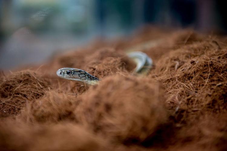 Close-up of snake