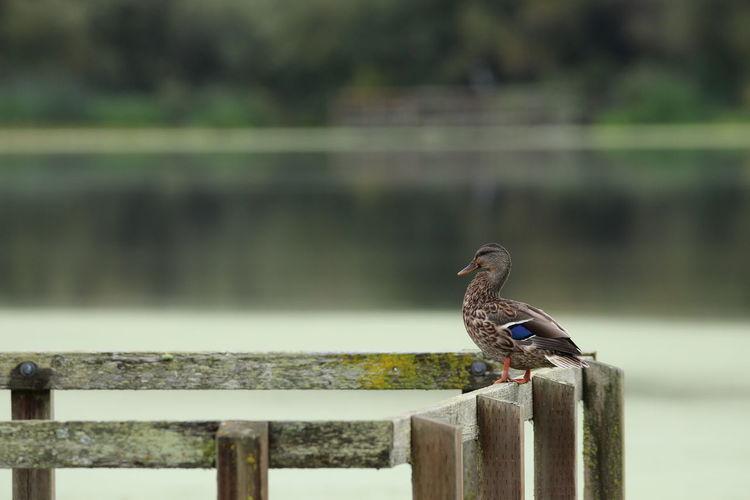 Close-up of bird perching railing