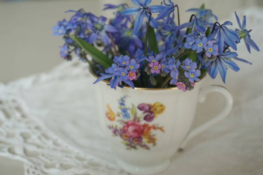 forget me not and scillas bouquet Scilla Forget Me Not Forget-me-not Forgetmenot Spring Springtime Spring Flowers White Background Flower Head Flower Bouquet Females Purple Close-up Plant Flower Arrangement Bunch Of Flowers Mother's Day Lavender Colored Flowering Plant In Bloom Vase Lavender Postcard Lilac