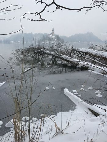 Fallen Trees Travel Destinations Tourism Island Winter Wonderland Snow Covered Slovenia Lake Bled Bled, Slovenia Winter Cold Temperature Snow Frozen Nature Weather High Angle View Bare Tree Outdoors Architecture Beauty In Nature Water