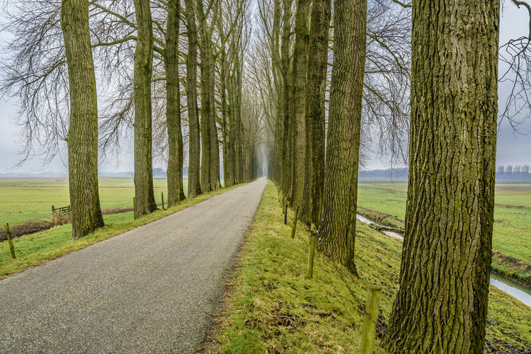 Endless road between an avenue of bare trees during the winter on a dike in dutch farmland. Beauty In Nature Conceptual Photography  Day Dike Endless Freedom Holland Horizon Landscape Lane Nature Netherlands Nature No People Outdoors Perspective Perspective Photography Road Roadtrip Scenics Season  Spooky Atmosphere Spooky Trees Tranquility Tree Winter Lost In The Landscape