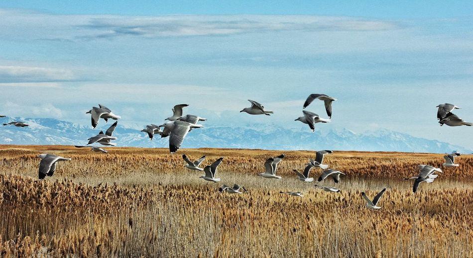 Seagulls flying over landscape against sky