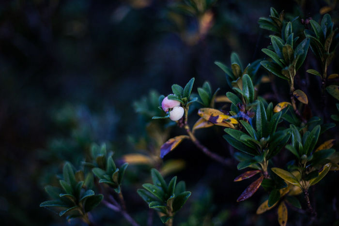 Beauty In Nature Blooming Close-up Day Flower Flower Head Fragility Freshness Growth Leaf Lonely Plant Nature No People Outdoors Petal Plant Wild Flowers Wildflower