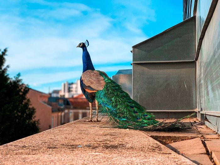 Bird perching on retaining wall against blue sky
