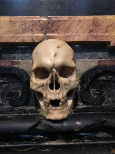 Illuminated Human Skull Human Body Part Human Skeleton Human Bone Horror Spooky Skull Close-up Indoors  Day People