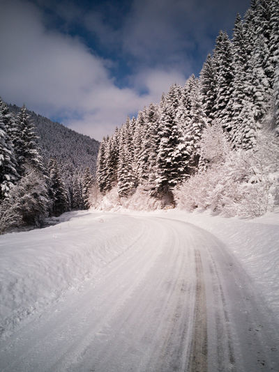 A scenic view of the way through the fir forest
