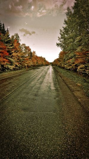 Road amidst trees against sky during autumn