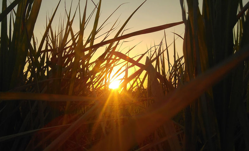 Sunset sunset sunset Nature Nature Photography Nature Sunlight Nature Sunset Nature Sunset Beauty Beauty In Nature Close-up Day Grass Growth Lens Flare Nature Nature_collection Nature_perfection Naturelovers No People Outdoors Plant Scenics Sky Sun Sunlight Sunset Tranquil Scene Tranquility