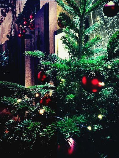 Novembre Mercatinidinatale Xmaslights Joyeux Noël**Marry Chrismas**Feliz Natal Bolzano - Bozen Brunico - Bruneck Brixen /Bressanone Südtirol Waiting For Christmas