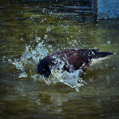 Gagans_photography Birds Monsoon Weather Instachandigarh Instaludhiana