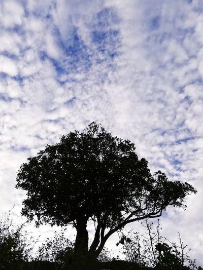 ✨ Tree Sky