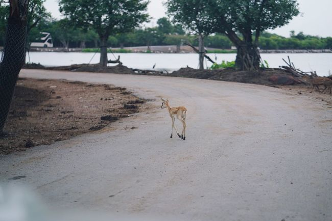 Animal Water Beach Animal Wildlife Dog Tree Nature Mammal Landscape Outdoors Animal Themes No People Tree Area Day Baboon African Elephant Deer Road A Cross A Crosswalk Little Animals In The Wild