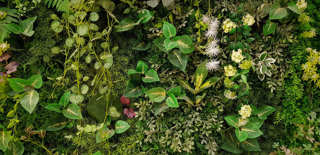 High angle view of flowering plant on field