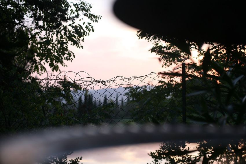 Garden view Aubagne Provence Alpes Cote D´Azur Provence Plant Tree Sky Nature No People Growth Silhouette Beauty In Nature Fence Sunset Cloud - Sky Tranquility Barrier Boundary Security Low Angle View Protection Safety Outdoors Branch