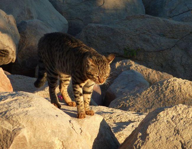 Somewhere in Egypt... Morningview Sharm El-Sheikh Hotel Life Egyptiancat Leopard Shadow Sand Sunlight Feline Safari Animals Tiger Big Cat
