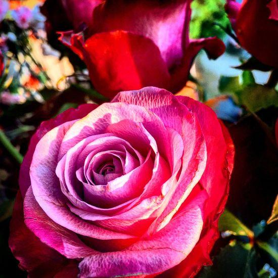 Love roses ❤️ Taking Photos First Eyeem Photo