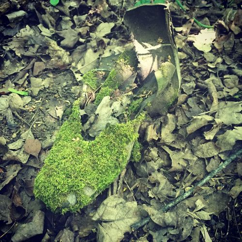 Shoose Mossy Moss Leaf Plant Part Green Color High Angle View No People Growth Day Nature Beauty In Nature Plant Field Outdoors