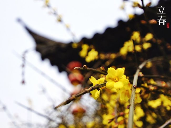 立春 Chinese Seasonal Divison Points Beginning Of Spring Flowers Chinese Garden Engoylife EyeEm Nature Lover Taking Photos