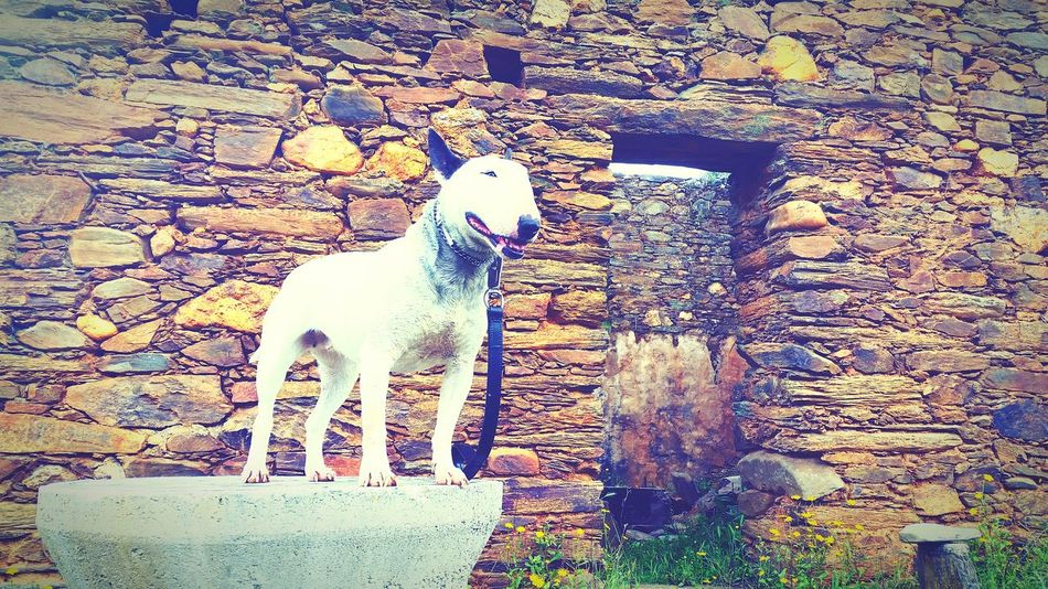 My Pet Geocaching Places Castelo Branco
