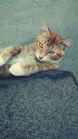 Gato Naranja Cat♡ Oliver Foto POSEE ✌
