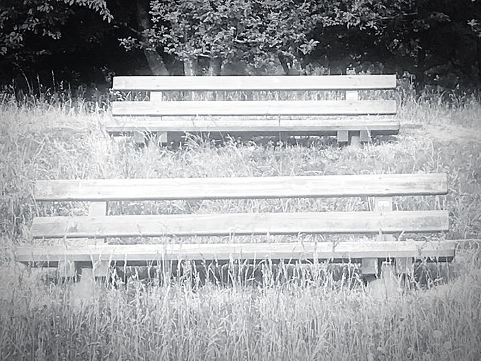 Just Sit And Wait Plant Bench Land Field Grass Nature Seat Day Park Growth No People Park - Man Made Space Tranquility Wood - Material Park Bench Sunlight Outdoors Absence Empty Scenics - Nature