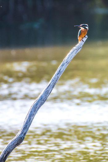 Close-up of bird perching on a lake