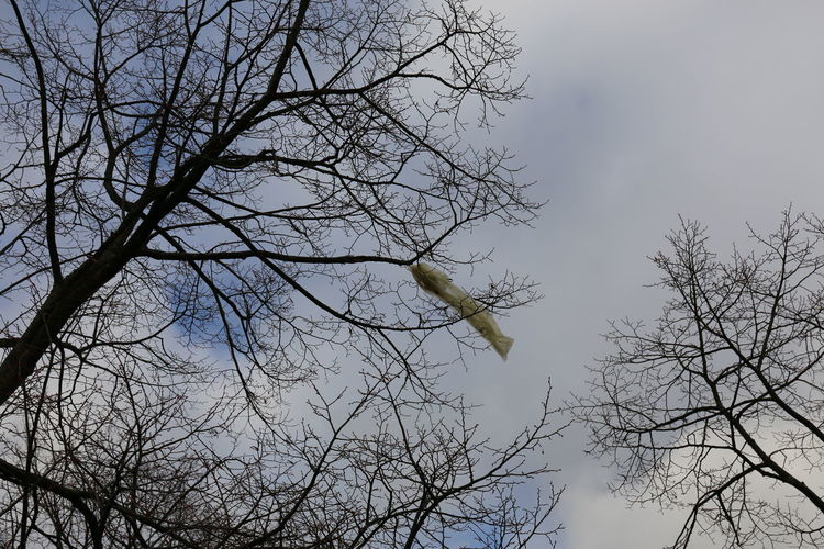 Nach Sturmtief Friederike 2018 - Plastiktüte im Baum Müllproblem Plastic Bag Plastic Bag Trees Storm Front Stormy Weather Sturmtief Sturmtief Frederike Sturmtief Friederike After The Storm Bare Tree Branch Day First World Problems Low Angle View Nach Dem Sturm Nature No People Outdoors Plastic Bag In Tree Plastic Garbage Everywhere Sky Tree Weather Conditions