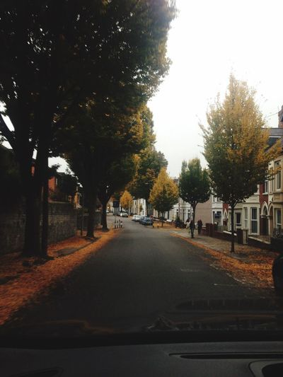 October Autumn Colors Leaves Orange Yellow Red Drive Season Of Hallow