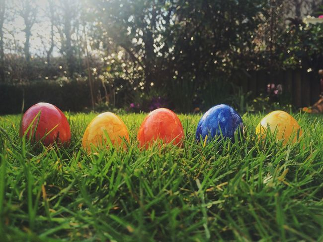 Close Up Close-up Colors Easter Eggs Easter Sunday Easteregg Eastern Eggs Eggs In The Nest Field Food Food And Drink Garden Garden Photography Grass Grassy Green Color In A Bowl No People S