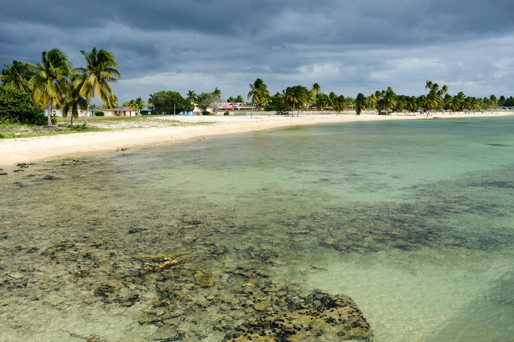Bay Of Pigs Cuba Beach Beauty In Nature Cloud - Sky Day Girón Landscape Nature No People Outdoors Palm Tree Sand Scenics Sea Sky Tranquil Scene Tranquility Tree Water