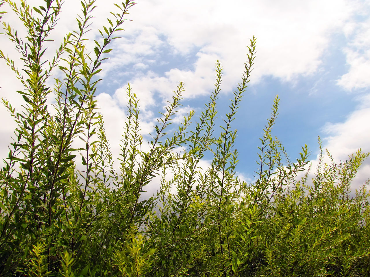 growth, nature, plant, green color, no people, beauty in nature, day, sky, outdoors, grass, close-up, freshness