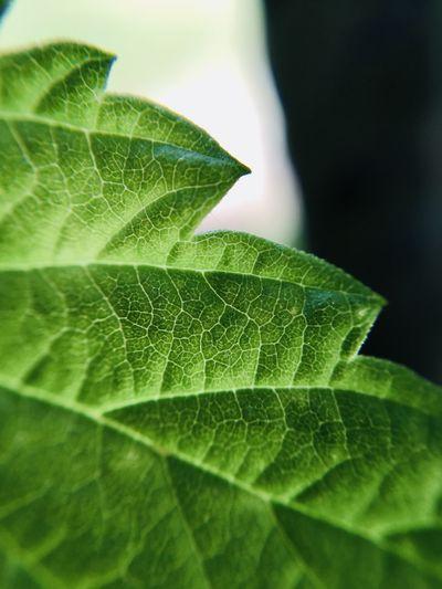 Macro shot of green leaves