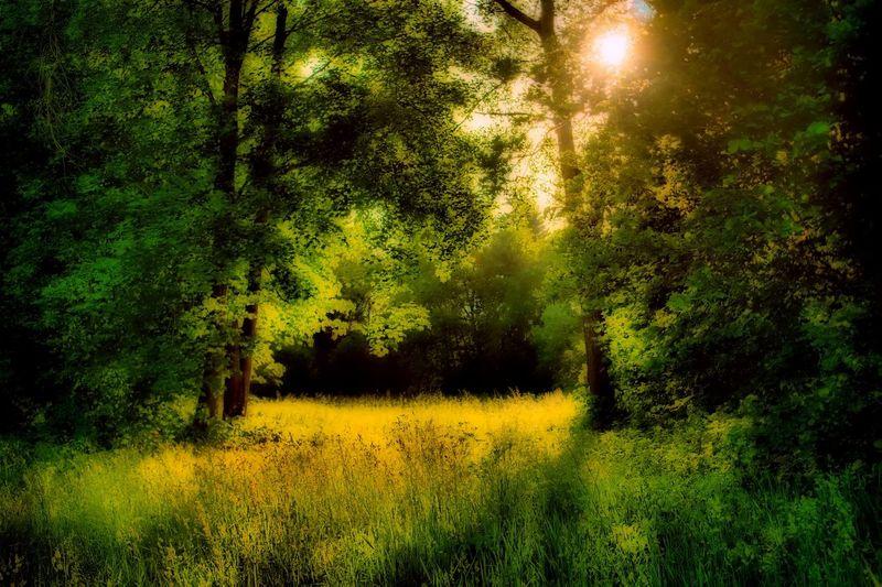 Fairy Tale Atmosphere Bavaria Beautiful Bill Ryker EyeEm Nature Lover EyeEm Gallery Fairytale  MA Eibl Scenic Sunlight Beauty In Nature Fantasy Forest Forrest Landscape Meadow Mystical Mystical Atmosphere Nature Outdoors Painted Image Scenics Summer Tree Water Meadow Yellow