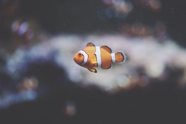 Profile view of clown fish in aquarium