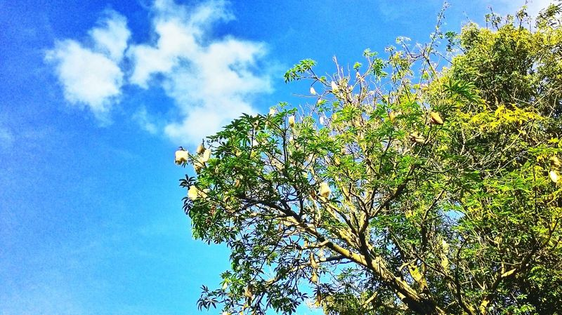 Tree Sky And Clouds Bluesky Lanscape Photography Beautiful Nature Eyeemnaturelover