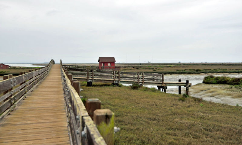 Picnic Hut At Newark Slough 4 Fremont, Ca. Don Edwards National Wildlife Refuge Tidal Trail Newark Slough Trail Western Coyote Hills Watershed Footbridge Picnic Hut Duck Hunters Cabin Stream Channel Banks Tidal Wetlands Marsh Marshlands San Mateo Bridge Communication Towers Nature Beauty In Nature Nature_collection Landscape_Collection Landscape_photography Foggy San Francisco Bay Pier Mudflats Wooden Bridge Levees Dikes Landscape