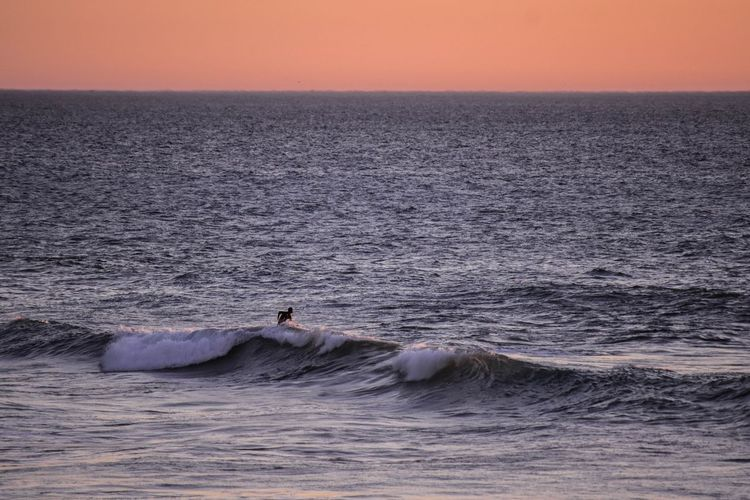 Distant view of man surfing in sea during sunset