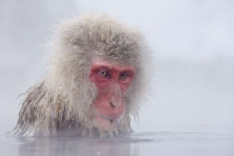Nature Monkey