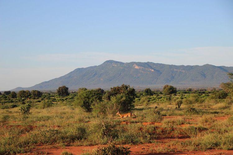 Grass Landscape Mountain Nature No People Plant Rennende Gazelle Running Gazelle Sky EyeEm Selects