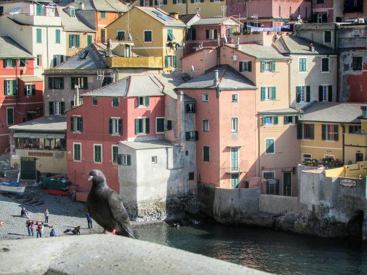 Pigeons The EyeEm Facebook Cover Challenge Zena4ever Urban Landscape