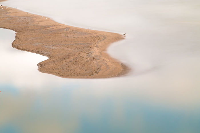 the still one Beauty In Nature Birds Day Environment High Angle View Land Long Exposure Nature No People Outdoors Reflection Sand Scenics - Nature Sea Seagull Tranquil Scene Tranquility Water