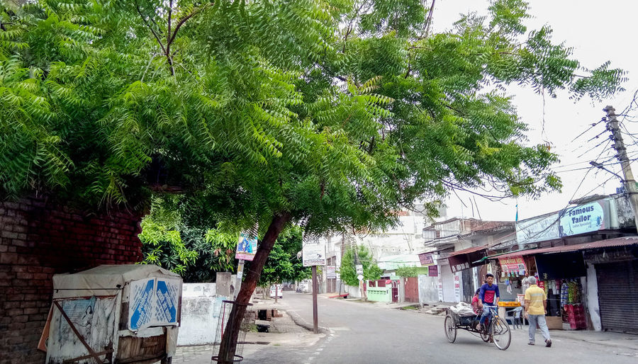 Street amidst trees and plants in city