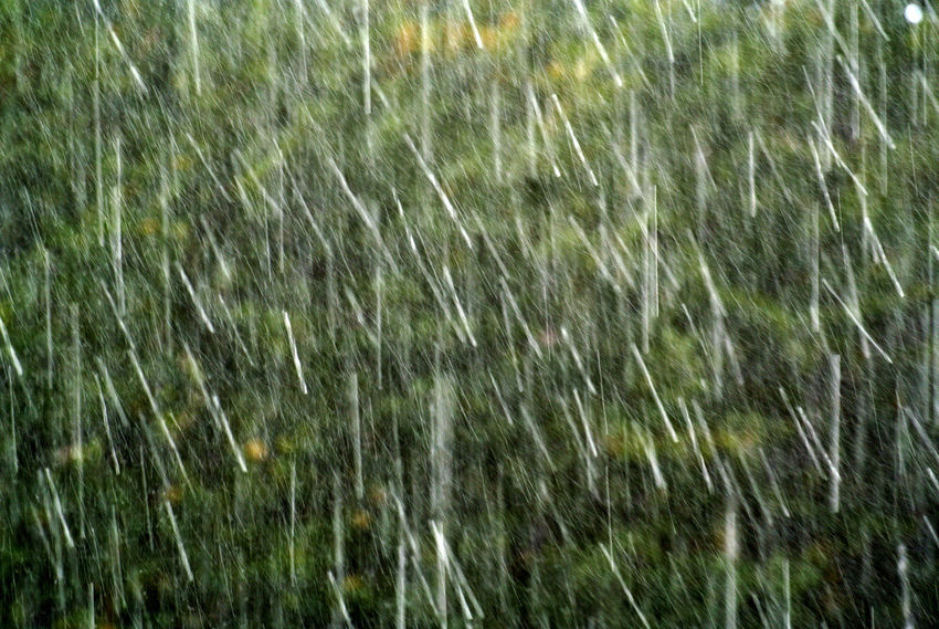 heavy rain and hail. Photograph (c) 2016 Kay-Christian Heine Backgrounds Beauty In Nature Blurred Motion Day Downpour Freshness Full Frame Green Green Color Growth Hail  Heavy Rain Lush Foliage Nature Non-urban Scene Outdoors Plant Rain Rain Raindrops Scenics Severe Weather Torrential Rain Water Wind