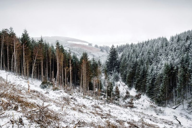 Combawn - White Hallow Ireland Combawn Hiking Tree Snow Mountain Cold Temperature Winter Forest Snowing Pine Tree Pinaceae Frozen Deep Snow Pine Woodland Powder Snow Fir Tree Spruce Tree Coniferous Tree Weather Foggy Evergreen Tree Glade