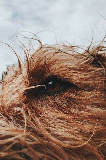 View Domestic Animals Pets Close-up No People Sky