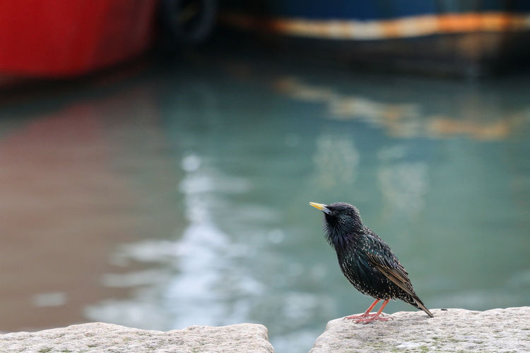 Bird perching on rock by the water